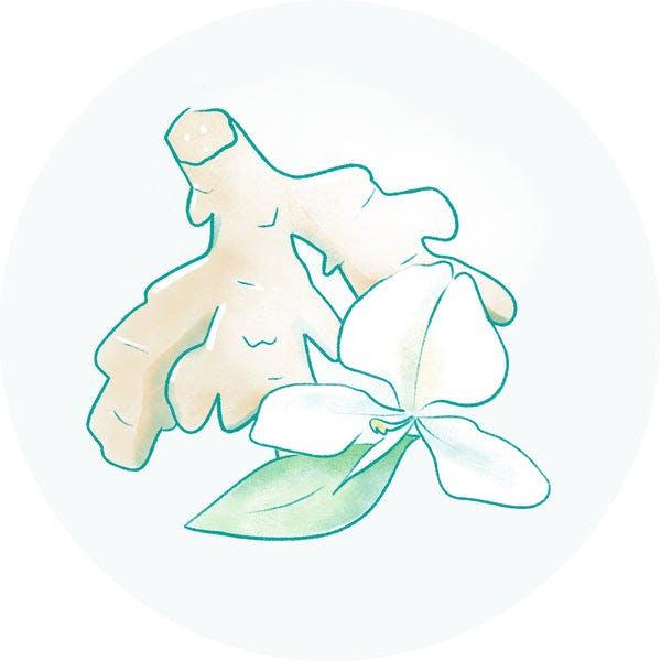Hawaiian White Ginger Extract